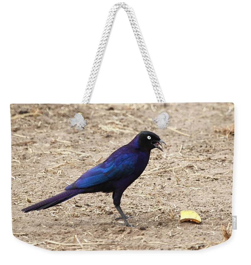 Long Tailed Glossy Starling Weekender Tote Bag featuring the photograph Long Tailed Glossy Starling by Carole-Anne Fooks