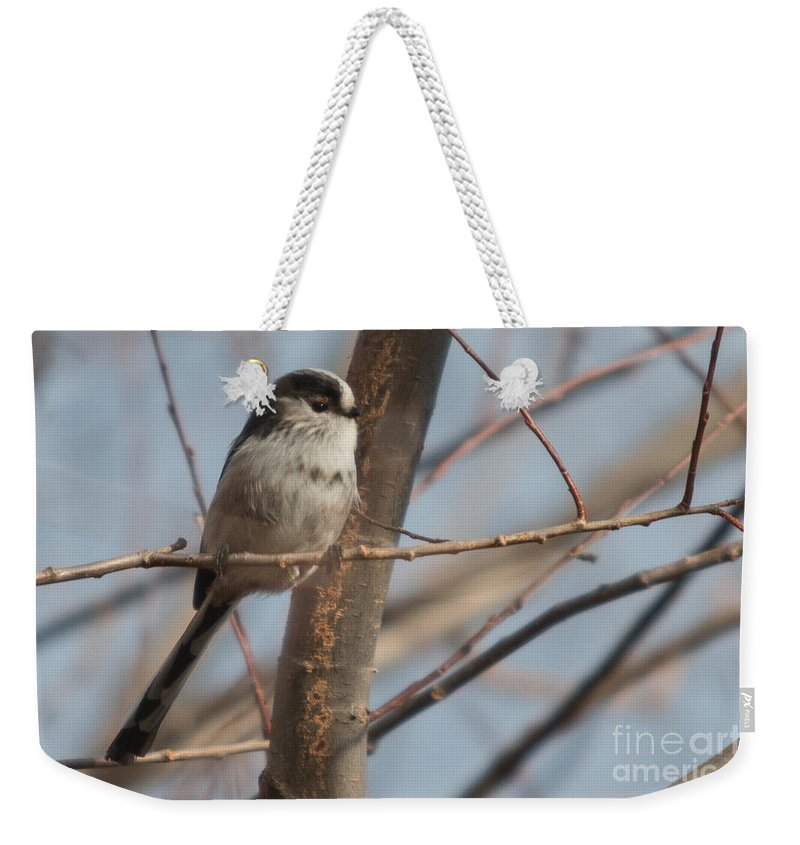 Aegithalos_caudatus Weekender Tote Bag featuring the photograph Long-tailed Tit Perched On Twig by Jivko Nakev