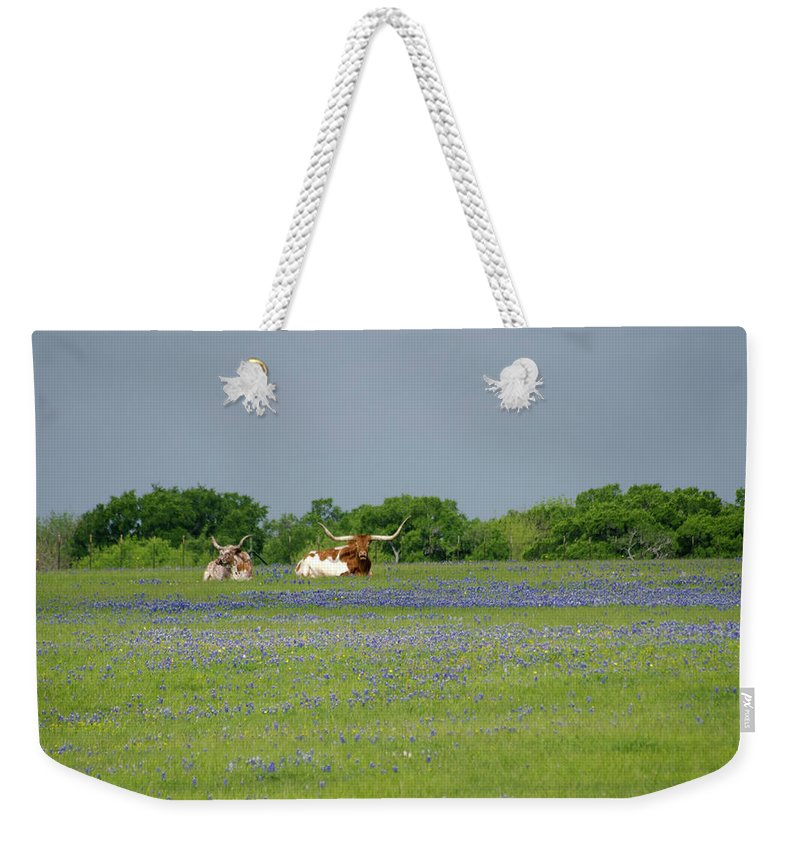 Horned Weekender Tote Bag featuring the photograph Longhorns And Bluebonnets by Linda Trine