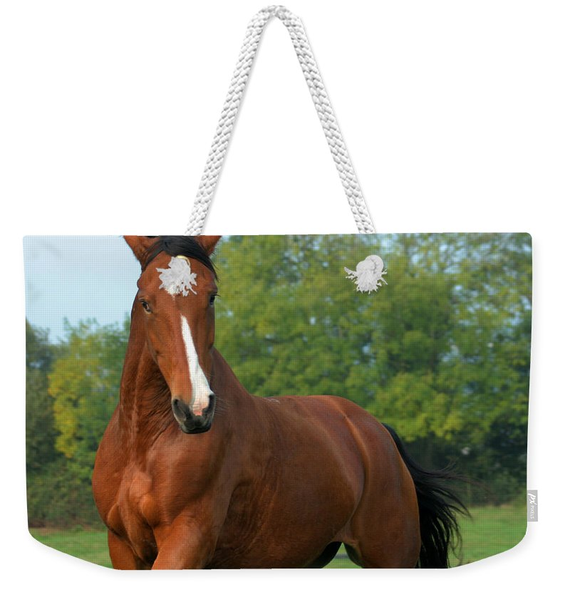Horse Weekender Tote Bag featuring the photograph Look How Pretty I Am by Angel Ciesniarska