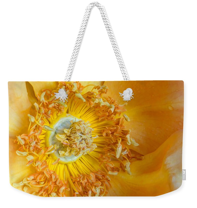 Nature Weekender Tote Bag featuring the photograph Look Within by Heidi Smith