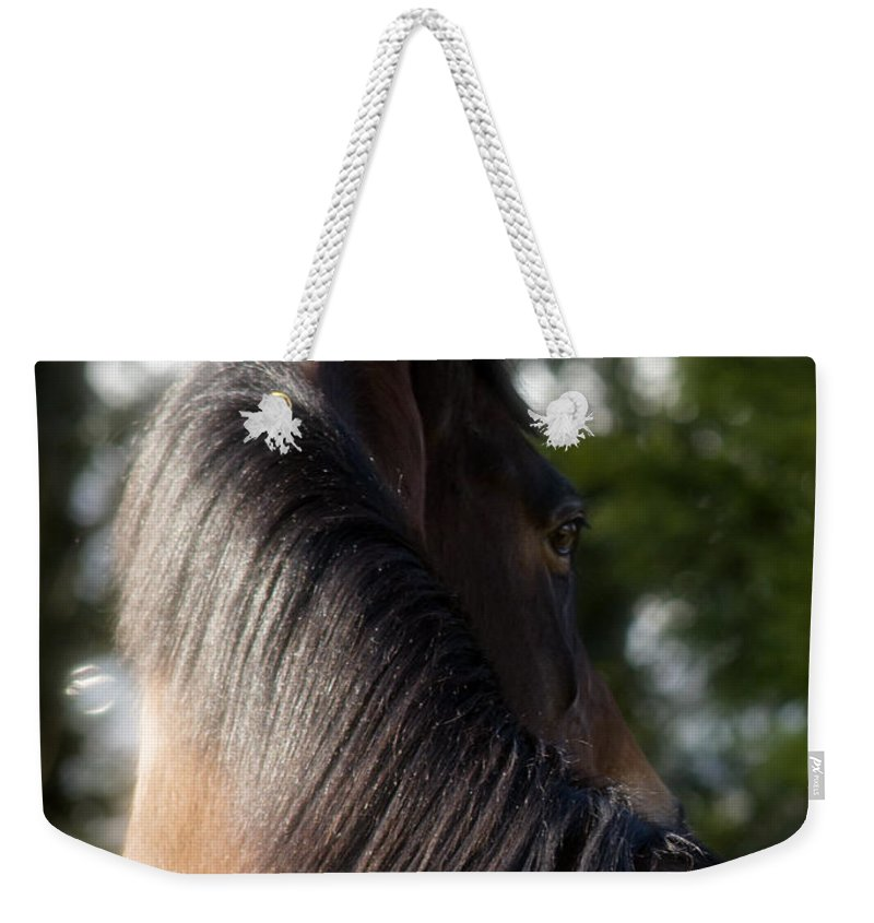 Horse Weekender Tote Bag featuring the photograph Looking Back by Angel Ciesniarska
