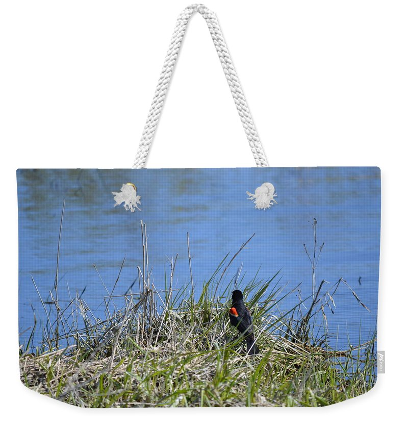 Red-wing Weekender Tote Bag featuring the photograph Looking For A Drink by Bonfire Photography