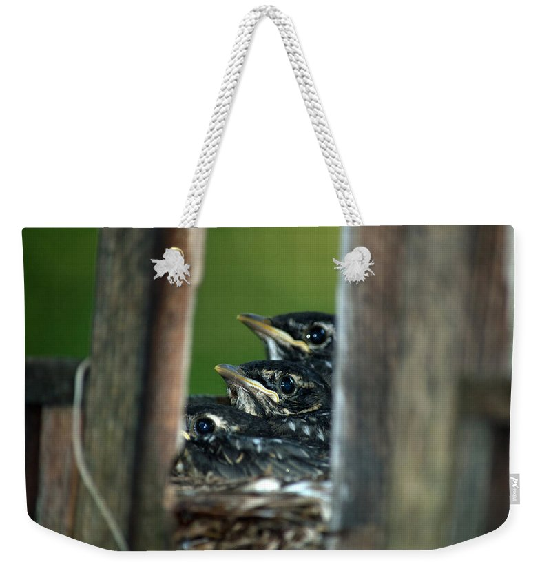 Robins Weekender Tote Bag featuring the photograph Looking For Mom by Linda Kerkau