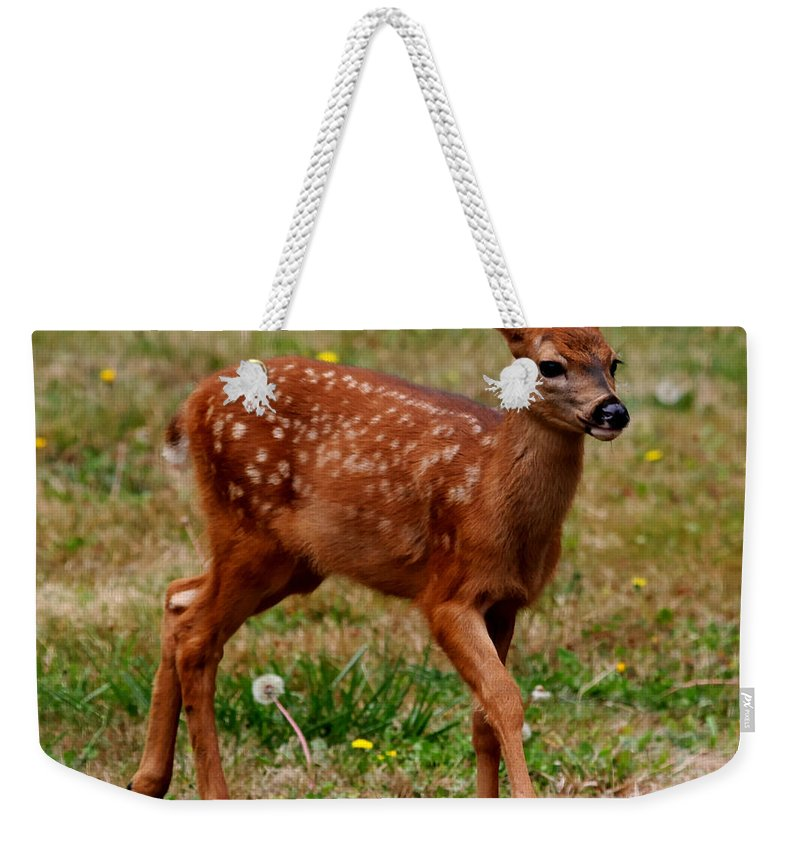 Deer Weekender Tote Bag featuring the photograph Looking For Mom - Pacific Northwest Washington by Tap On Photo