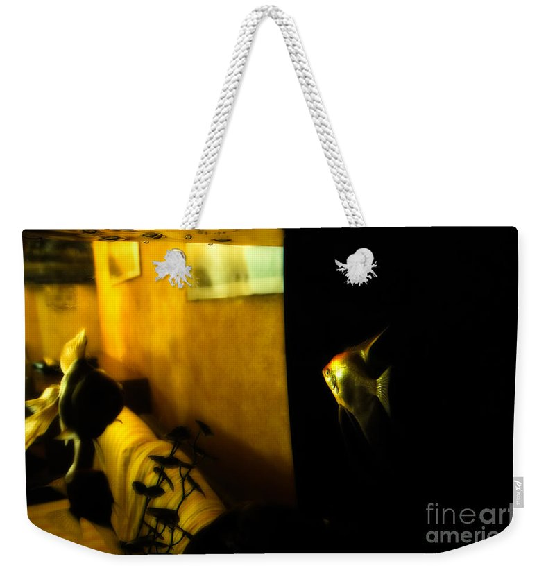 Goldfish Weekender Tote Bag featuring the photograph Looking Out by Silvia Ganora