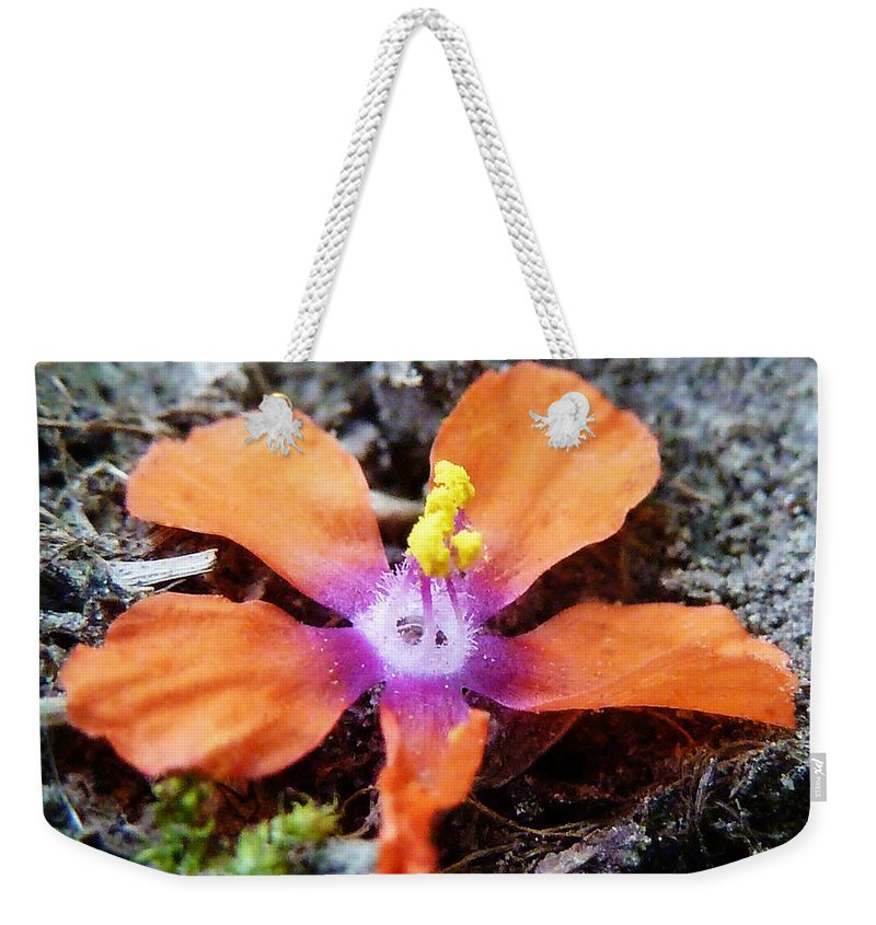 Fallen Weekender Tote Bag featuring the photograph Lost Adhesion by Steve Taylor