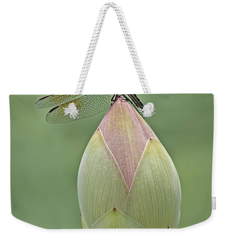 Insect Weekender Tote Bag featuring the photograph Lotus Bud And Dragonfly by Susan Candelario