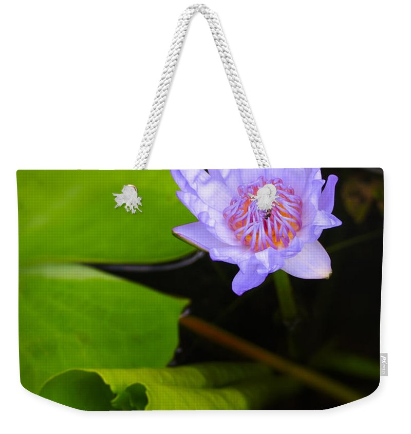 3scape Photos Weekender Tote Bag featuring the photograph Lotus Flower And Lily Pad by Adam Romanowicz