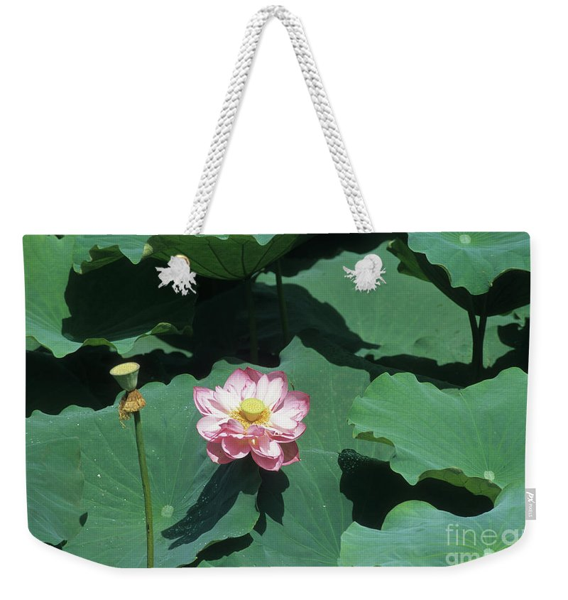 Flower Weekender Tote Bag featuring the photograph Lotus Flower by James Brunker