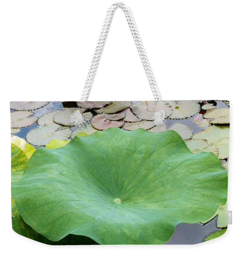Color Weekender Tote Bag featuring the photograph Lotus Leaf by Amar Sheow