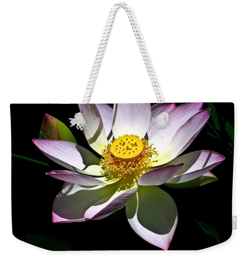 Lotus Weekender Tote Bag featuring the photograph Lotus Of The Night by Douglas Barnett