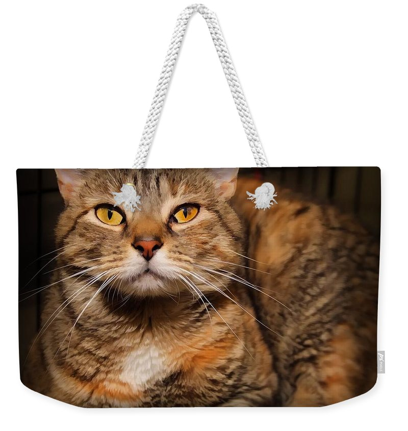 Double Tabby Weekender Tote Bag featuring the photograph Louise by Joyce Baldassarre