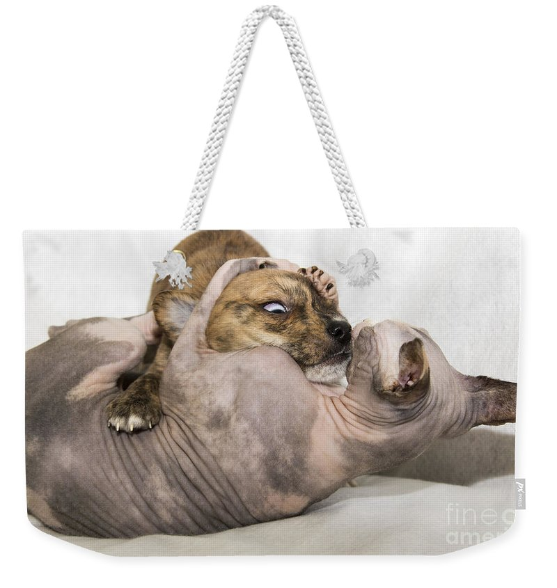 Pet Photography Weekender Tote Bag featuring the photograph Love Hurts by Jeannette Hunt