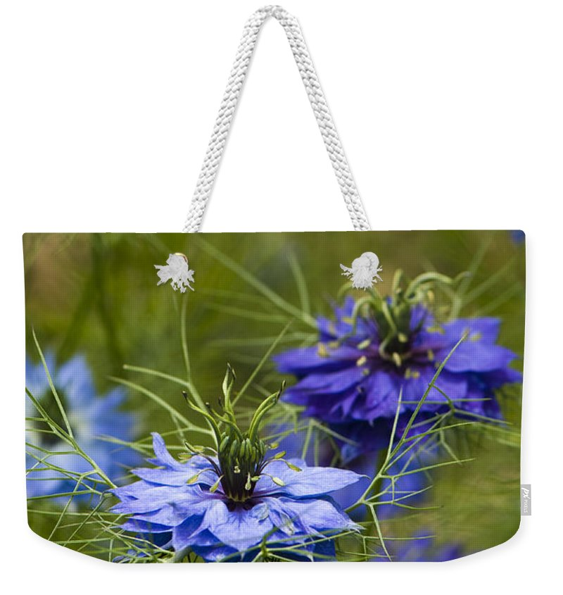 Garden Weekender Tote Bag featuring the photograph Love In A Mist by Anne Gilbert