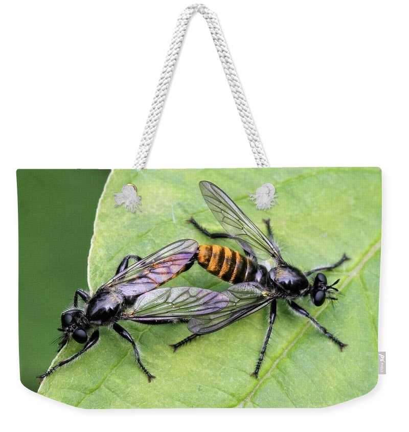Robber Fly Weekender Tote Bag featuring the photograph Love On A Leaf by Doris Potter