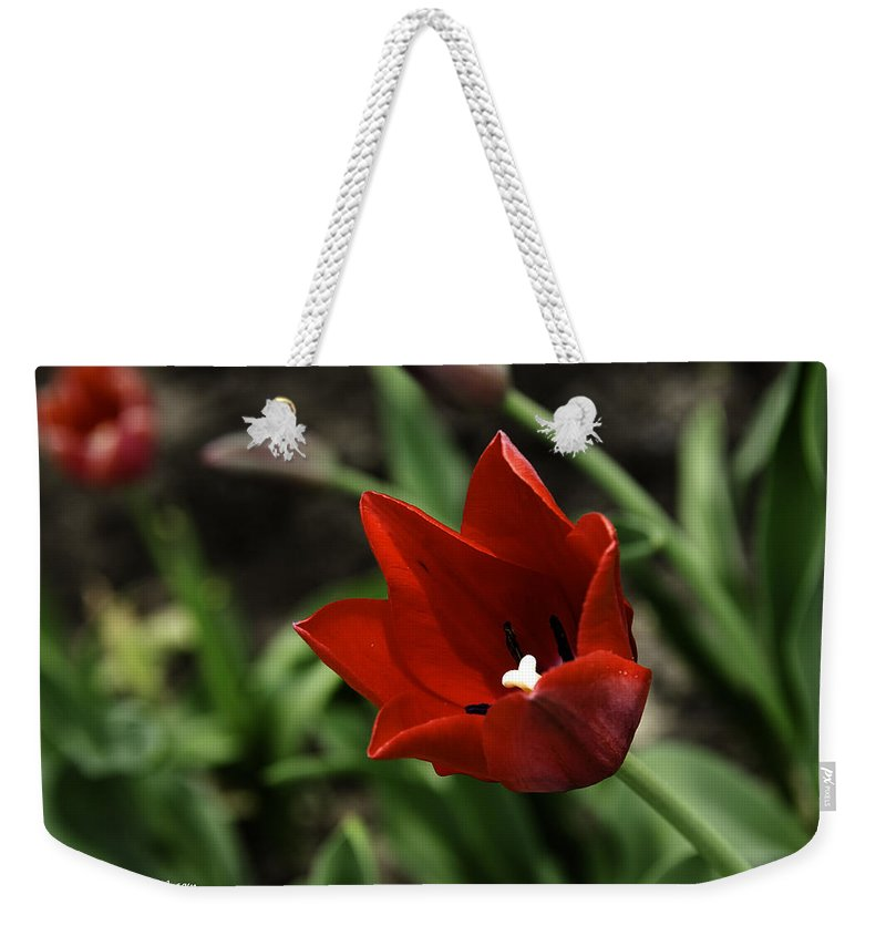 Usa Weekender Tote Bag featuring the photograph Love Tulip Time by LeeAnn McLaneGoetz McLaneGoetzStudioLLCcom