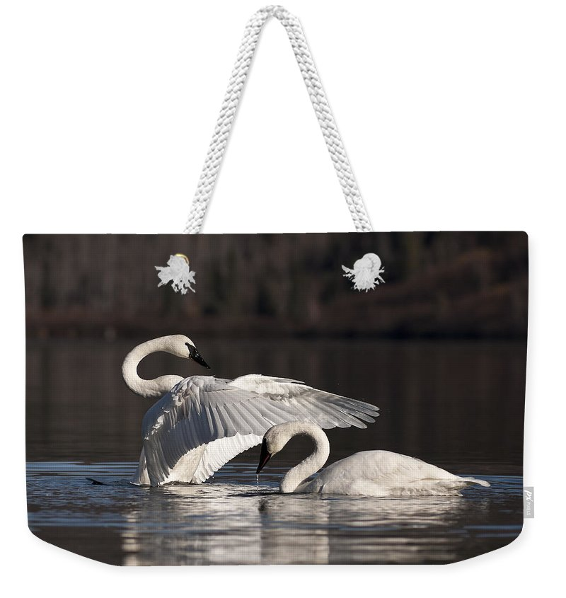 Swan Weekender Tote Bag featuring the photograph Loving Embrace by Ted Raynor