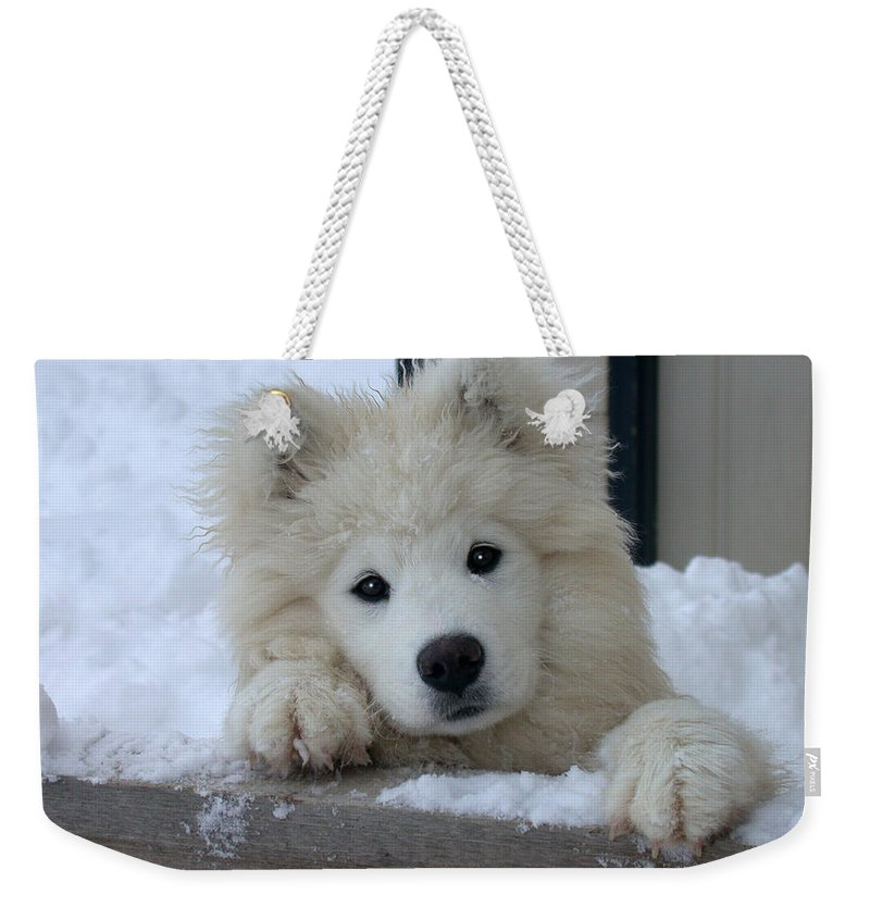 Samoyed Weekender Tote Bag featuring the photograph Loving The Snow by Shane Bechler
