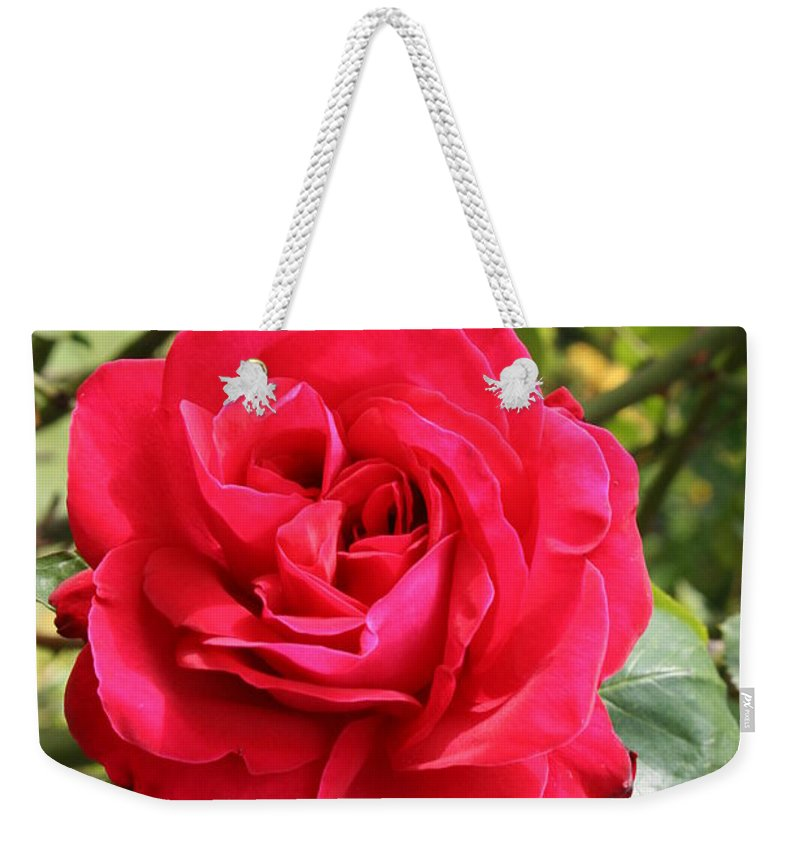Rose Weekender Tote Bag featuring the photograph Lovely Red Rose by Christiane Schulze Art And Photography