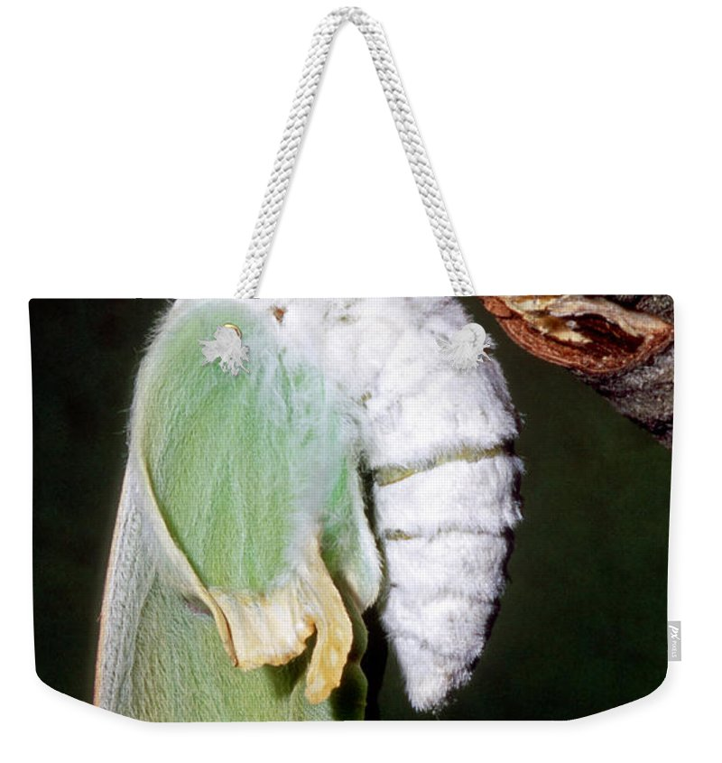 Animal Weekender Tote Bag featuring the photograph Luna Moth Actias Luna Newly Hatched by Millard H. Sharp