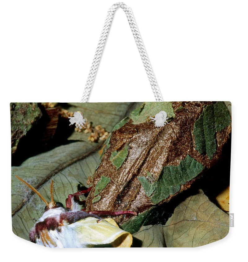 Animal Weekender Tote Bag featuring the photograph Luna Moth Emerging From Cocoon by Millard H. Sharp