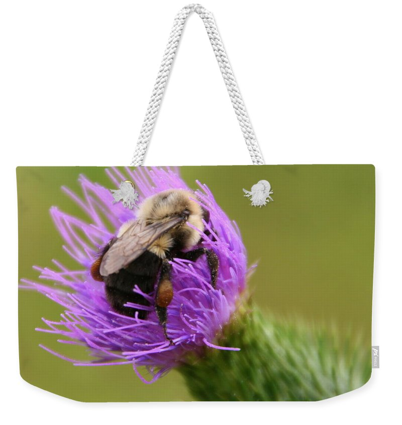 Thistle Weekender Tote Bag featuring the photograph Lunching Atop A Thistle by Laurel Talabere
