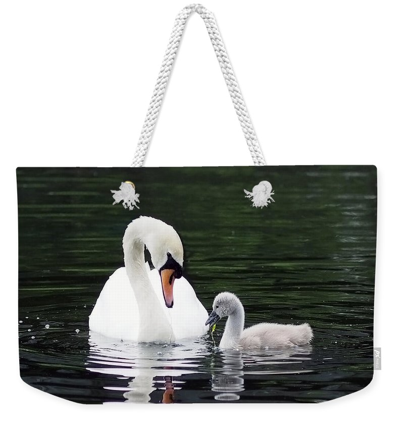 Swan Weekender Tote Bag featuring the photograph Lunchtime For Swan And Cygnet by Rona Black