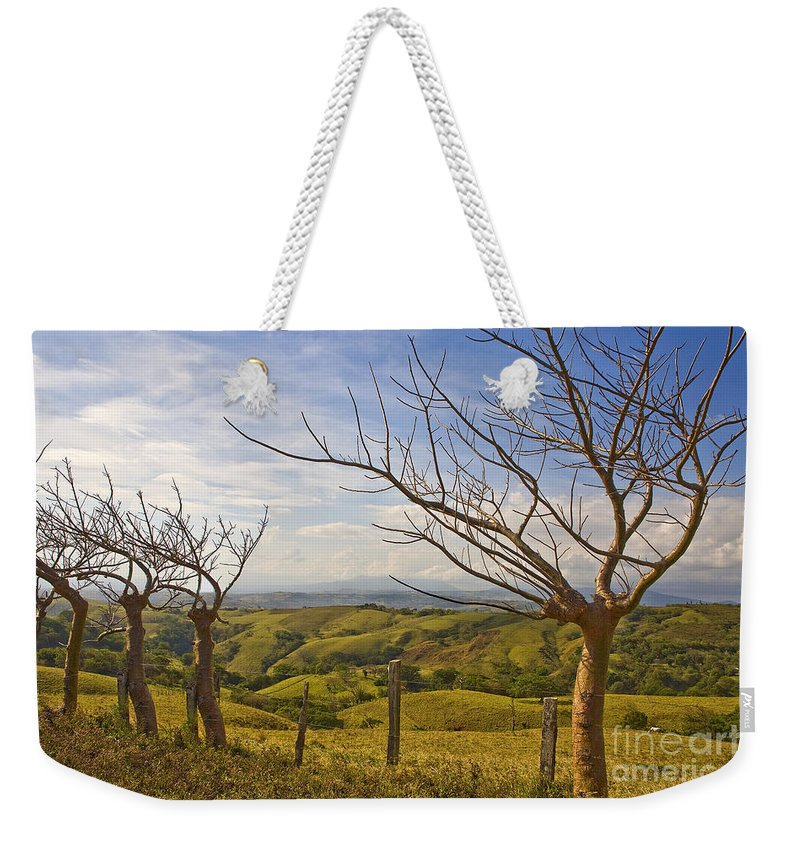 Landscape Weekender Tote Bag featuring the photograph Lush Land Leafless Trees 2 by Madeline Ellis