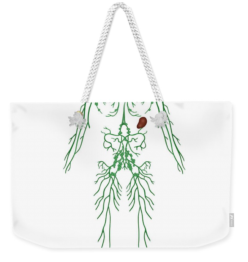 Science Weekender Tote Bag featuring the photograph Lymphatic System, Illustration by Gwen Shockey