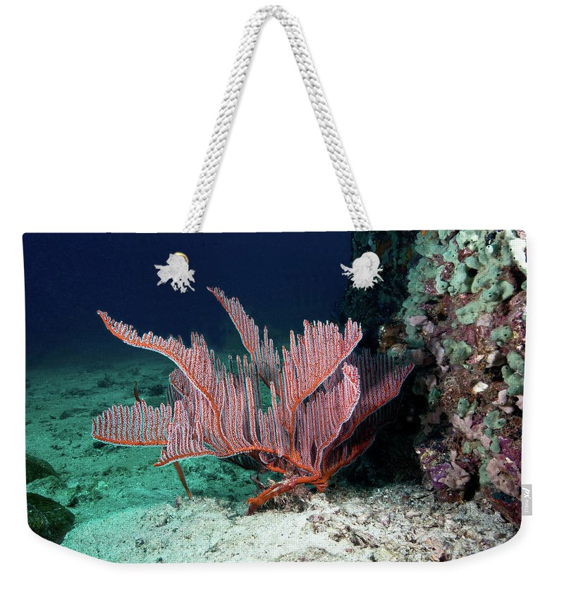 Underwater Weekender Tote Bag featuring the photograph Lyre Gorgonian, Harp Coral by Gerard Soury