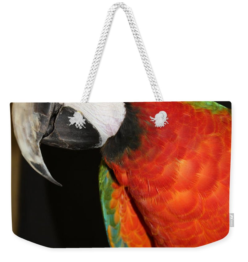 Macaw Profile Weekender Tote Bag featuring the photograph Macaw Profile by John Telfer