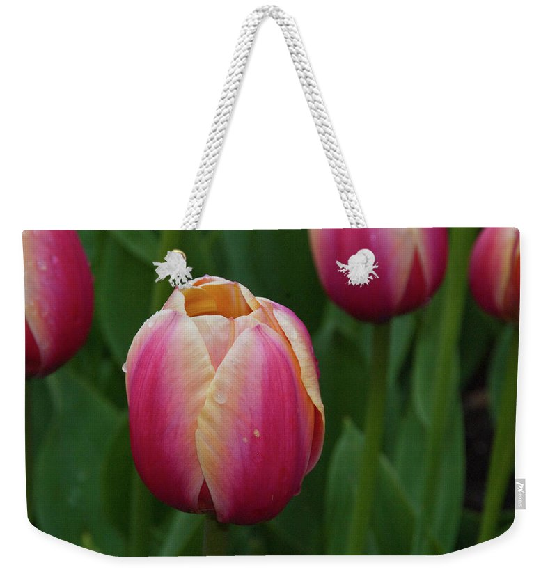 Flowers Weekender Tote Bag featuring the photograph Mackinac Tulip 10386 by Guy Whiteley