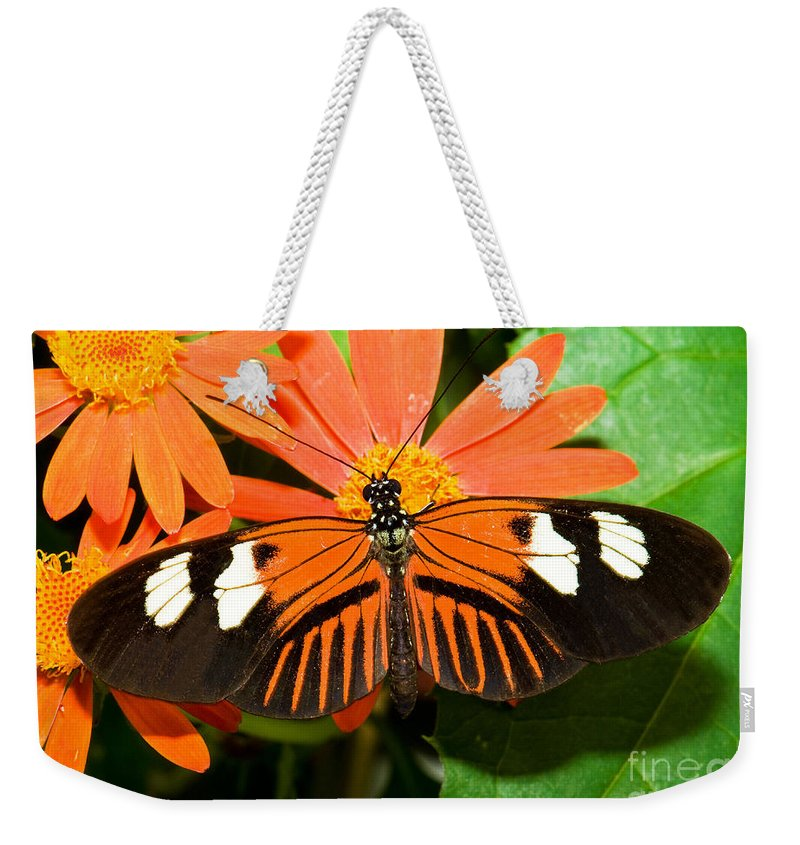 Tropical Butterfly Weekender Tote Bag featuring the photograph Madeira Butterfly by Millard H. Sharp