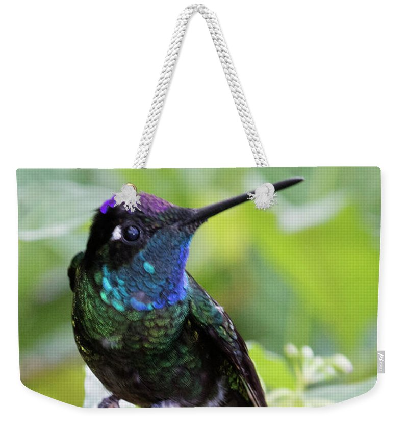 Travel Weekender Tote Bag featuring the photograph Magnificent Hummingibrd Male by Hal Beral