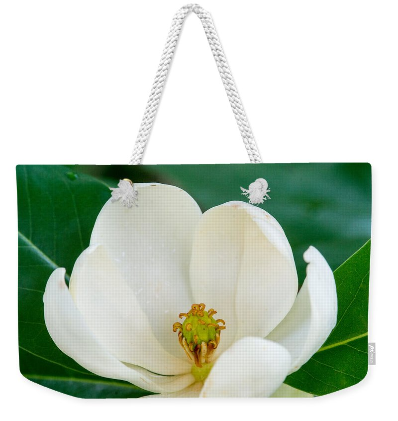 Magnolia Weekender Tote Bag featuring the photograph Magnolia Blossom 2 by Douglas Barnett