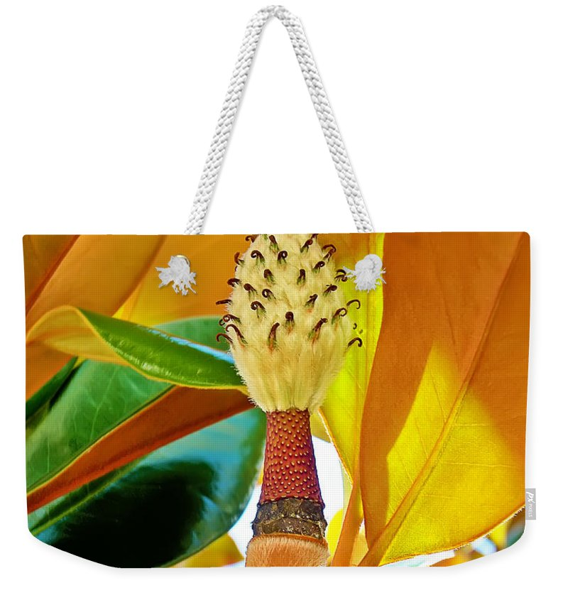 Magnolia Weekender Tote Bag featuring the photograph Magnolia Flower by Olga Hamilton