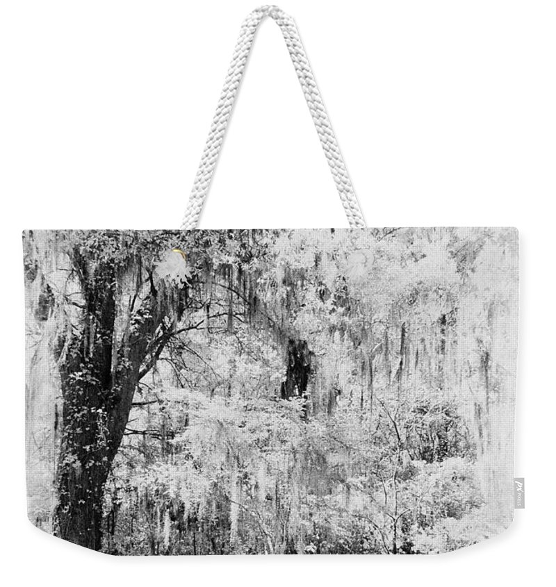 Tree Weekender Tote Bag featuring the photograph Magnolia Garden Path by Sharon M Connolly