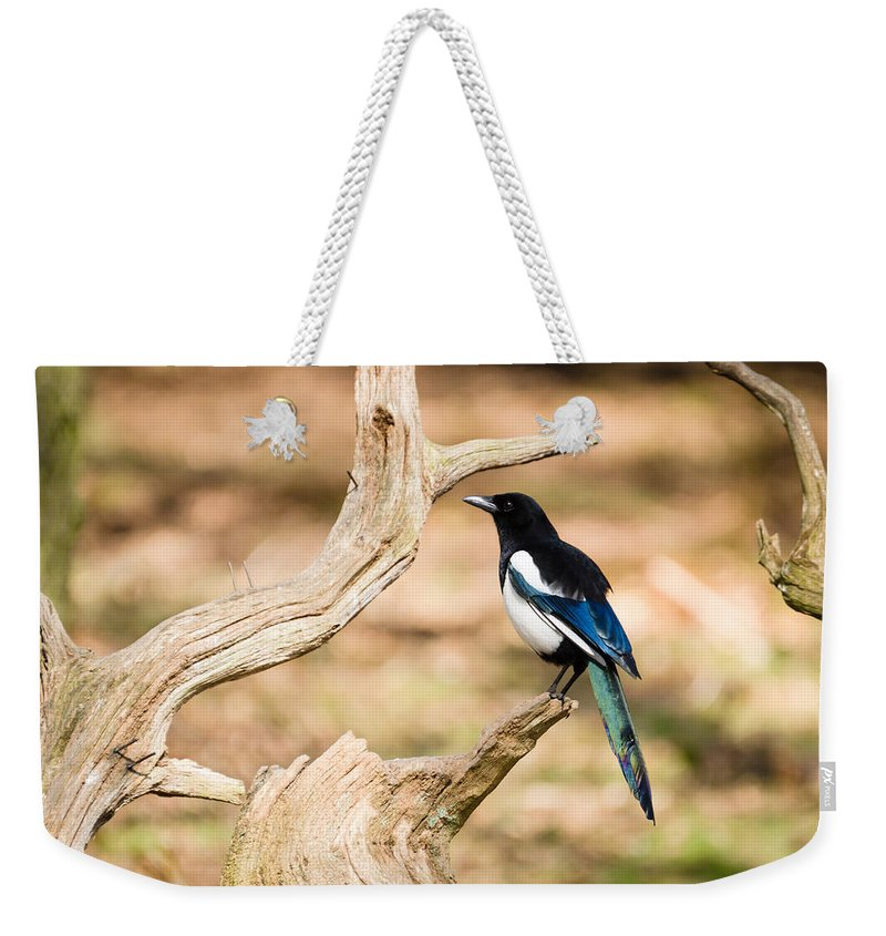 Animal Weekender Tote Bag featuring the photograph Magpie by David Head