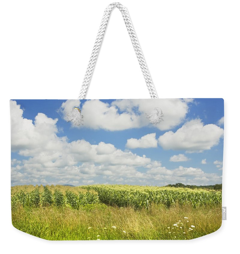 Maine Corn Field Weekender Tote Bag featuring the photograph Maine Corn Field In Summer Photo Print by Keith Webber Jr