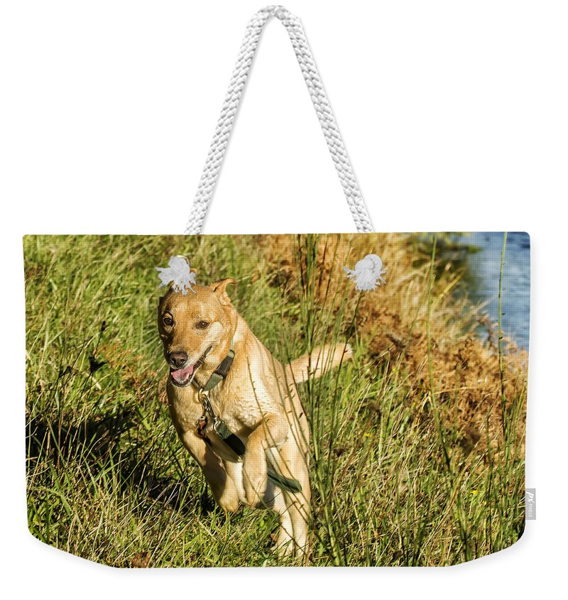 Dog Weekender Tote Bag featuring the photograph Maisie - Boundless Energy by Belinda Greb