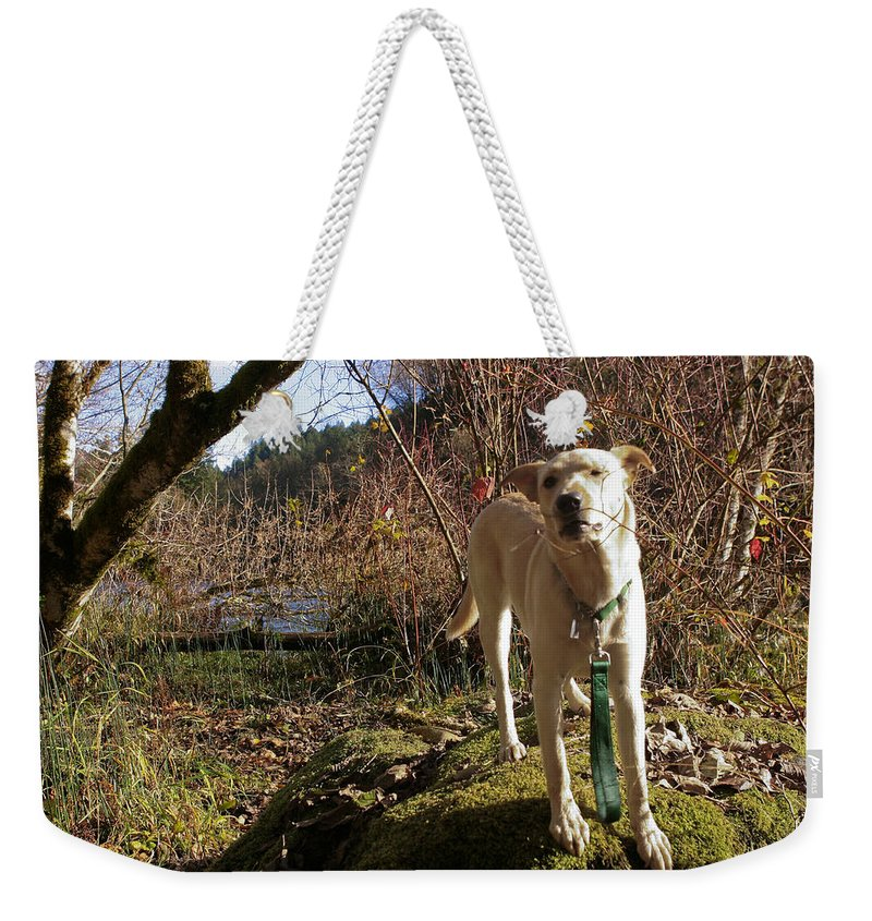 Animal Weekender Tote Bag featuring the photograph Maisie On A Rock by Belinda Greb