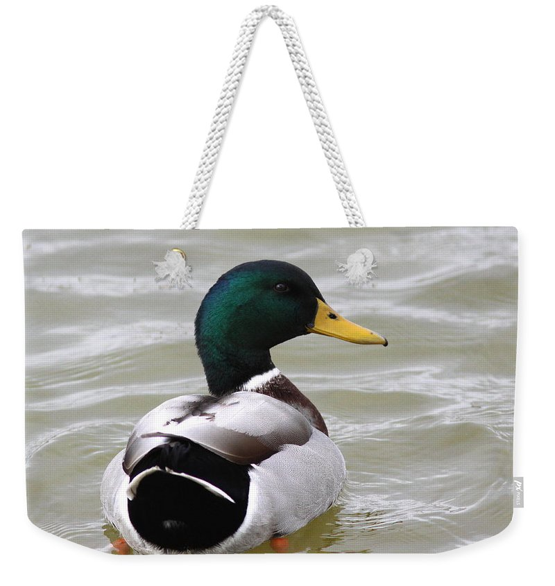 Majestic Weekender Tote Bag featuring the photograph Majestic Mallard - Duck by Travis Truelove