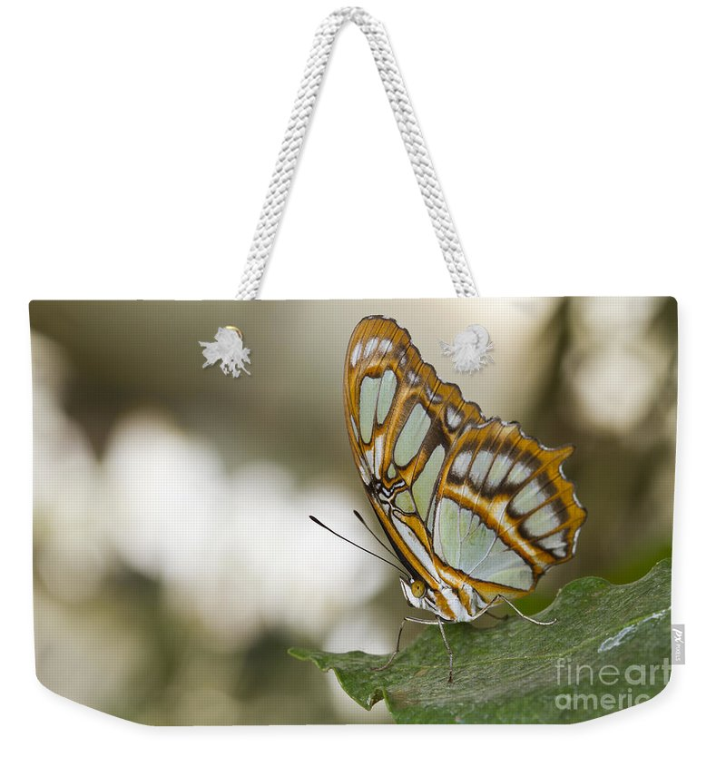 Malachite Weekender Tote Bag featuring the photograph Malachite Butterfly by Bryan Keil