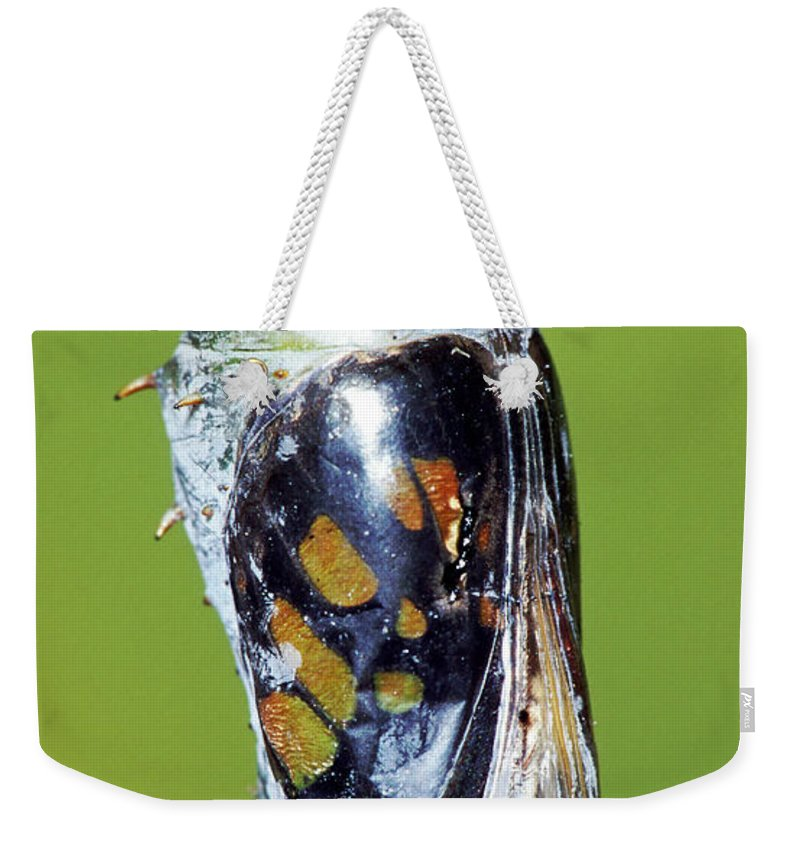 Fauna Weekender Tote Bag featuring the photograph Malachite Butterfly Metamorphosis by Millard H. Sharp