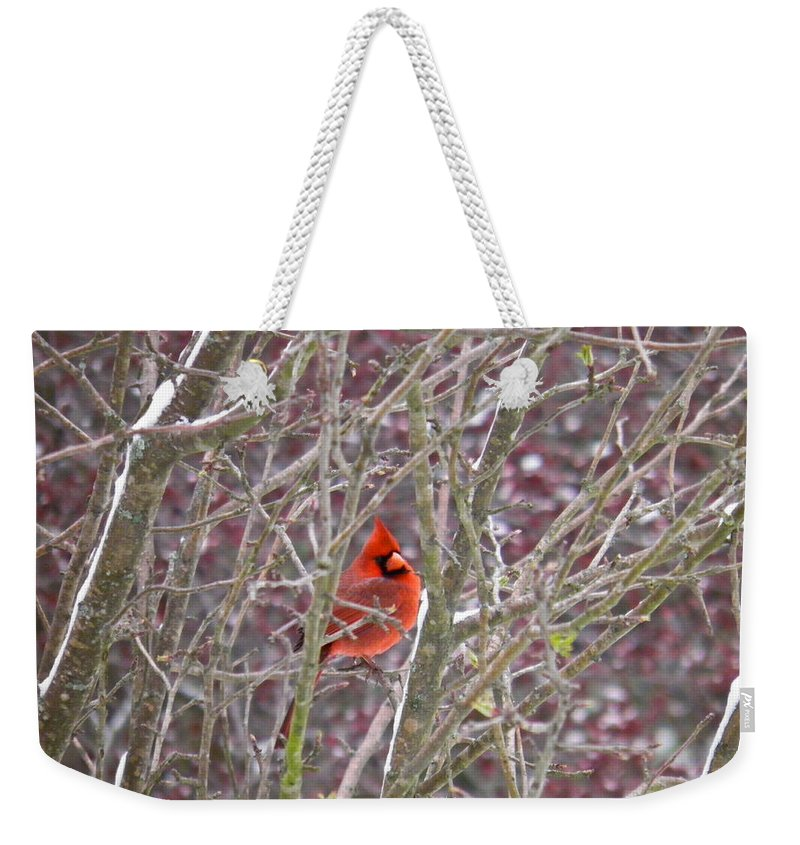 Cardinal Weekender Tote Bag featuring the photograph Male Cardinal Cold Day 2 by Nick Kirby