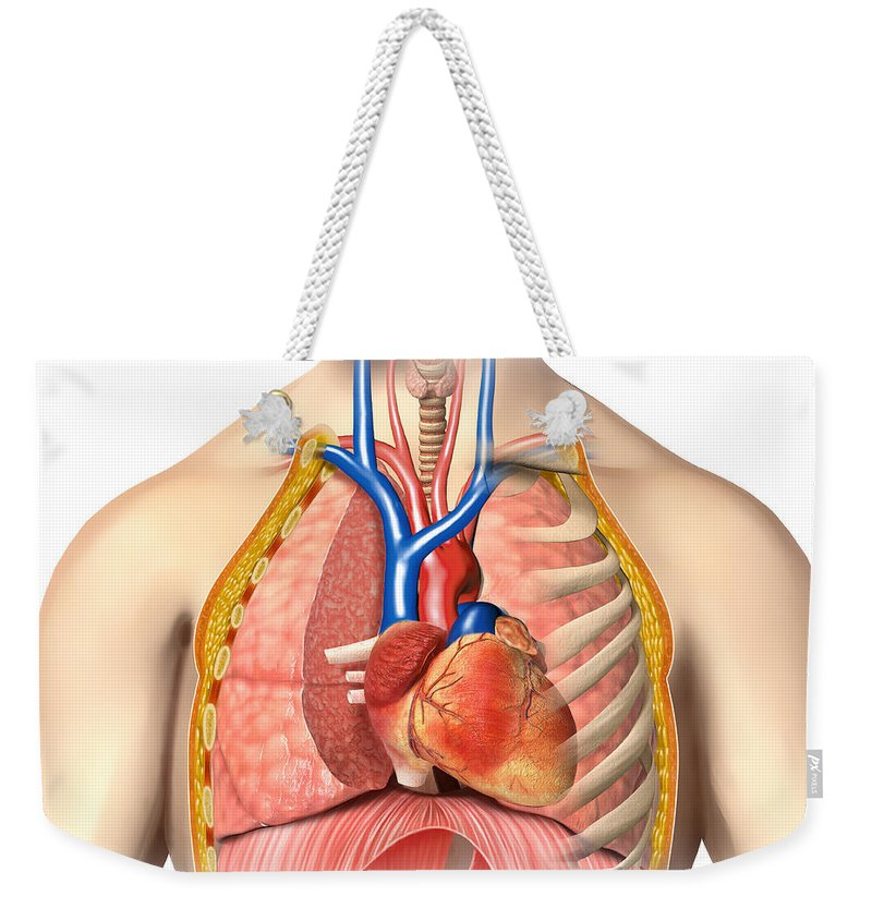 Male Chest Anatomy Of Thorax Weekender Tote Bag for Sale by Leonello ...