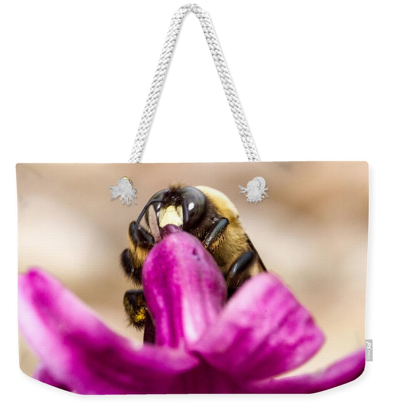Male Eastern Carpenter Bee Feeding Weekender Tote Bag featuring the photograph Male Eastern Carpenter Bee Feeding 2 by Douglas Barnett