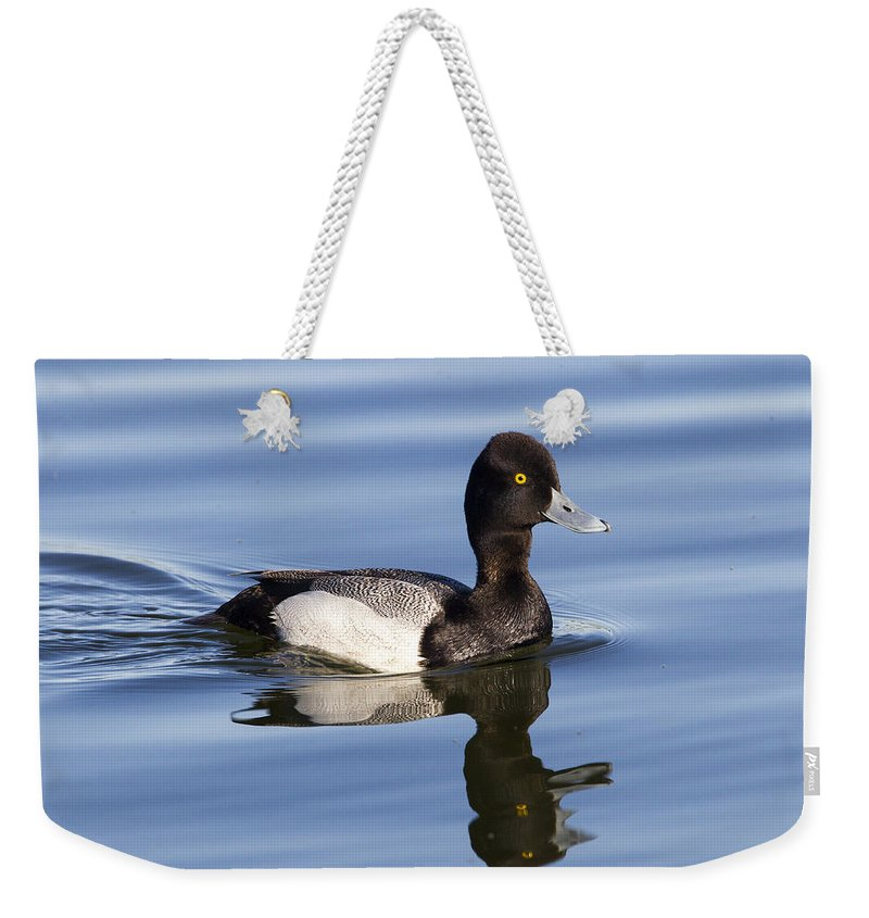 Doug Lloyd Weekender Tote Bag featuring the photograph Male Leser Scaup by Doug Lloyd
