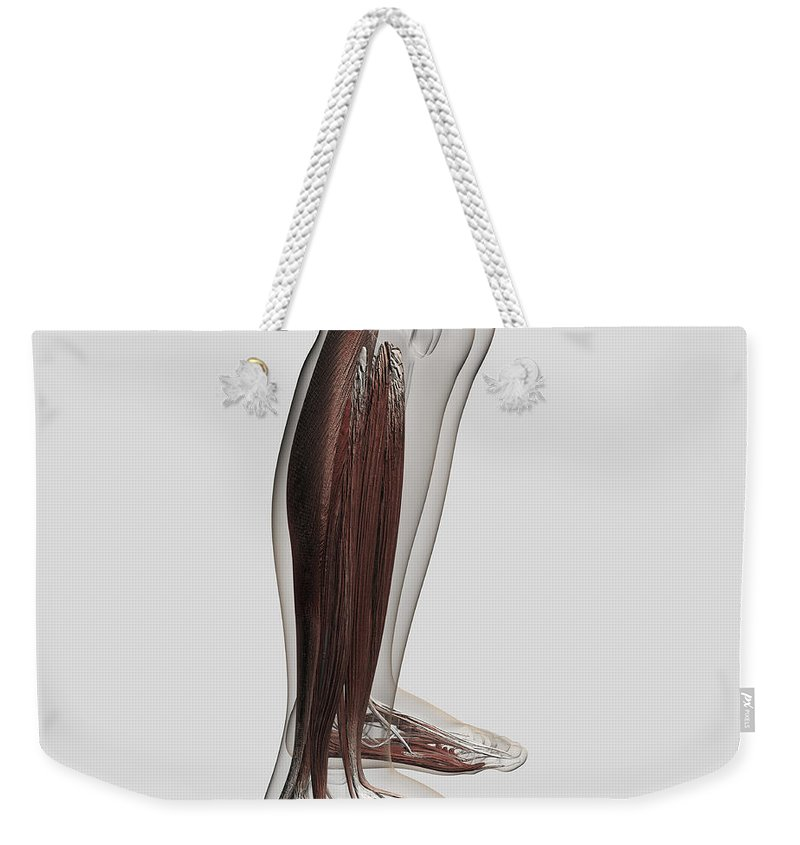 Square Image Weekender Tote Bag featuring the digital art Male Muscle Anatomy Of The Human Legs by Stocktrek Images